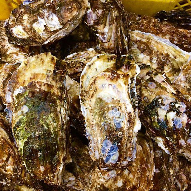 【nerihiko】さんのInstagramをピンしています。 《朝出荷してたらいつの間にか雪が積もりはじめた。 沖行かなくてもよくなったから、むき身業者さんのところに牡蠣むき習いに行こうかどうしようか。 #マルテン水産 #広田湾 #陸前高田 #小友町 #両替漁港  #牡蠣  #牡蠣養殖 #養殖いかだ #海 #船 #oyster #Rikuzentakata #Hirotabay #instagood #sea #Maruten #出荷 #雪降ってきた #ちょっと積もってる #むき身 #牡蠣むき》
