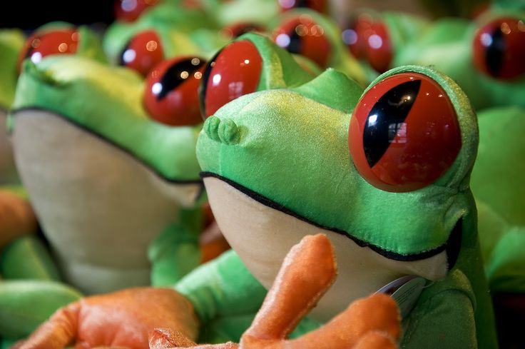 One of our most popular souvenirs... take home your very own Cha Cha the Tree Frog toy!