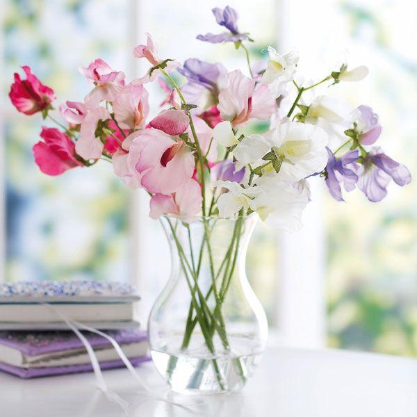 Sweetpeas in Small Clear Vase (אֲפוּנָה רֵיחָנִית בֶּאֲגַרְטָל זְכוּכִית קָט)