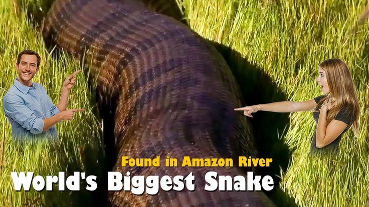 WORLD BIGGEST SNAKE ANACONDA FOUND IN AMERICAS AMAZON