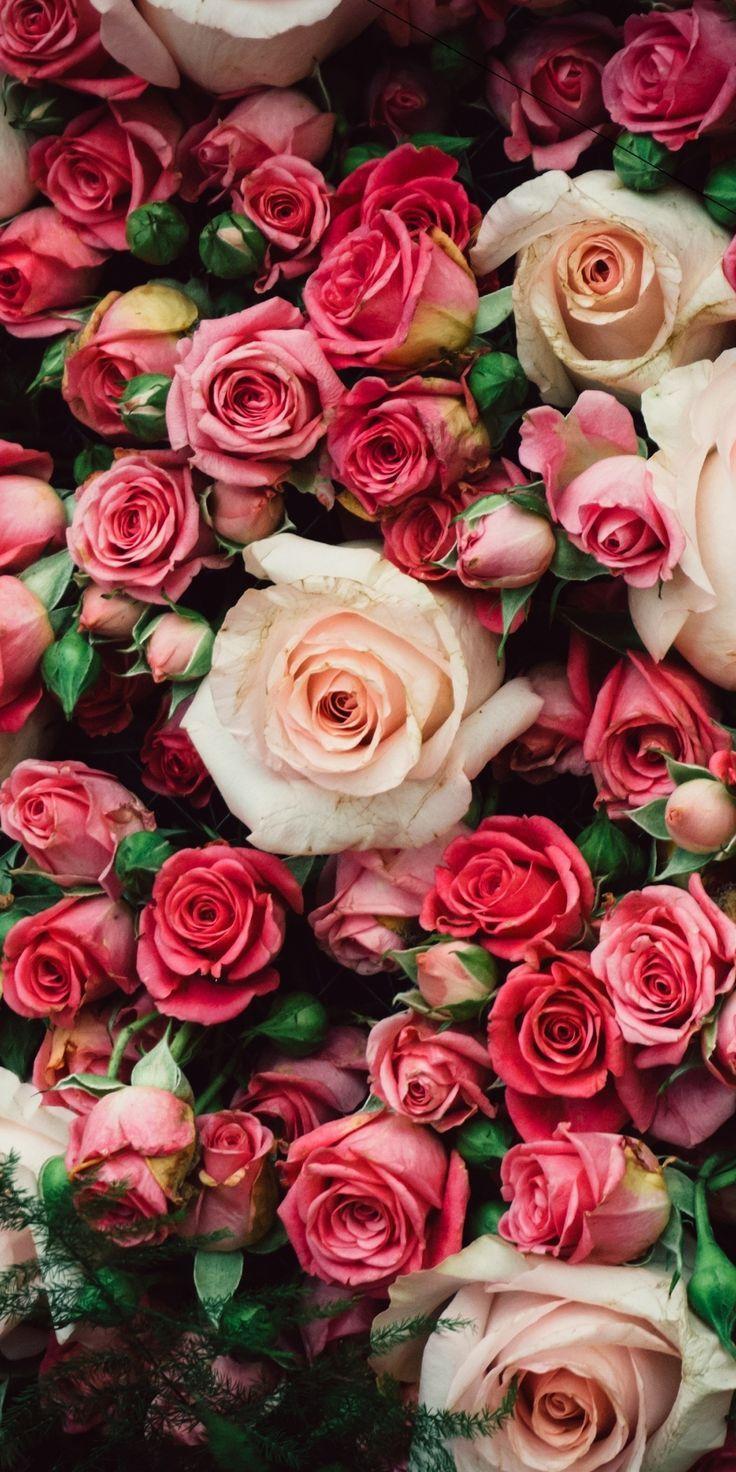 Fresh Roses Pink Decoration 1080x2160 Wallpaper Beautiful Flowers Wallpapers Flowers Flower Aesthetic