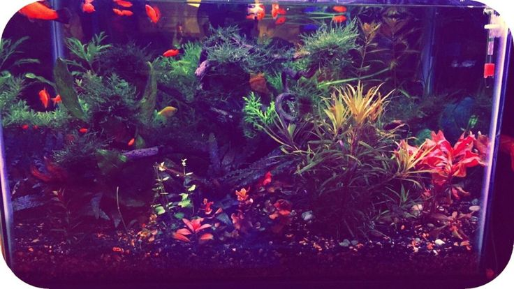 How did I get from my low-tech 20 gallons aquarium…  to high-tech? You can say, by adding pressurized CO2 to it…so not only CO2 is making your tank high tech, but also a few more factors. In the end of this post I think you should have a bigger picture of what the amator …