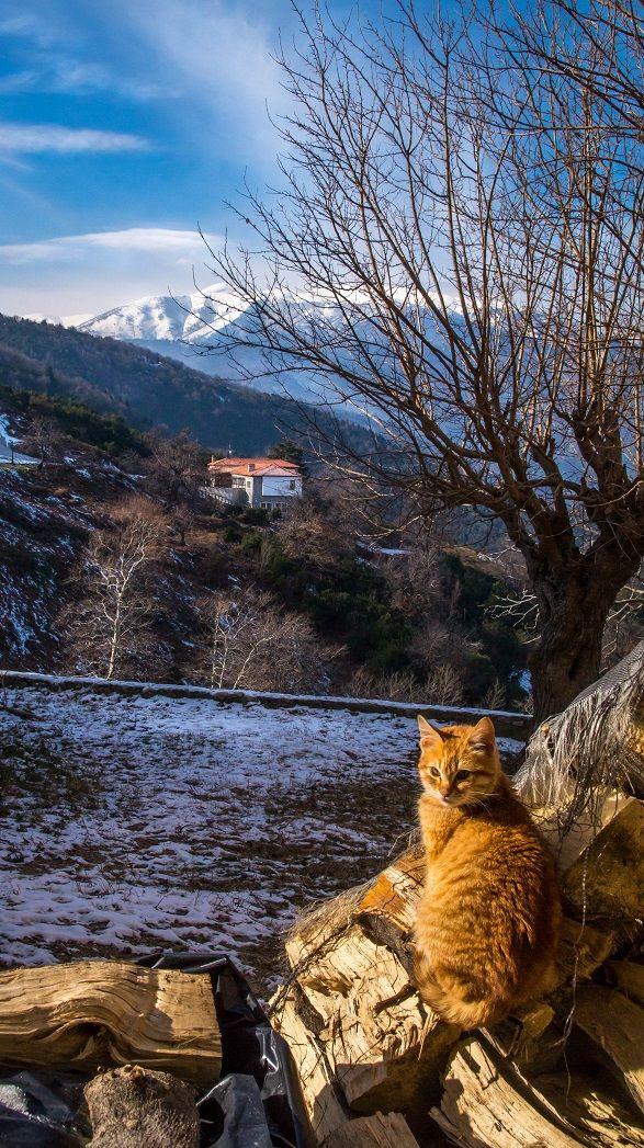 Στα ζεστά - Φωτογραφία: Νικόλας Μανωλάκος