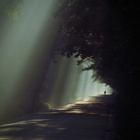 FFFFOUND!: Forests, The Roads, Inspiration, Walks, Paths, Trees Tunnel, Graphics Design, Trav'Lin Lighting, Dirt Roads