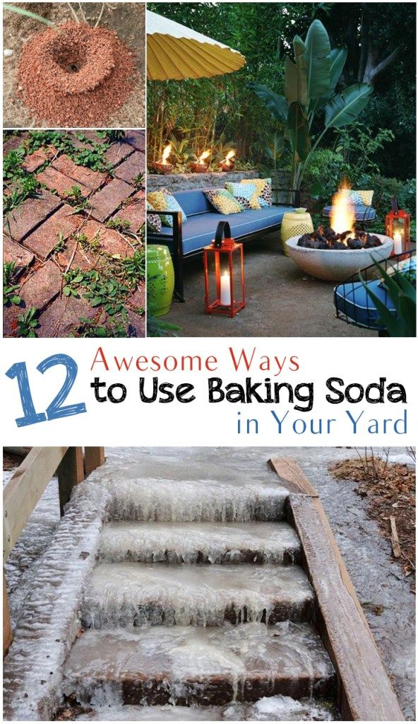Baking soda garden hacks, baking soda hacks, popular pin, gardening, gardening…