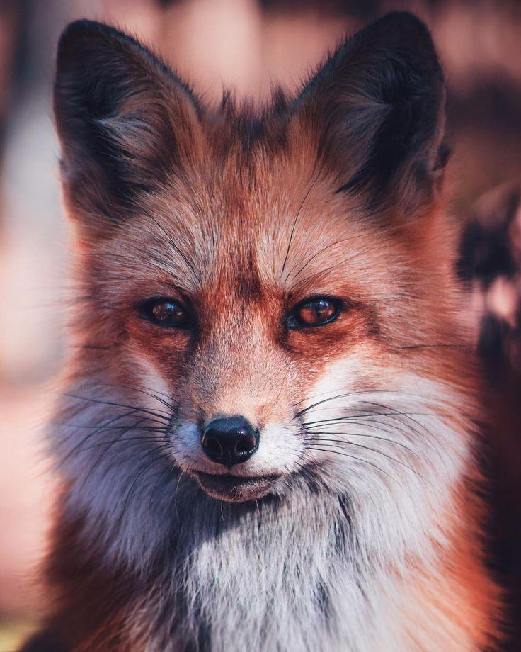 компания специализируется фото лиса для авы работы благоустройству придомовой