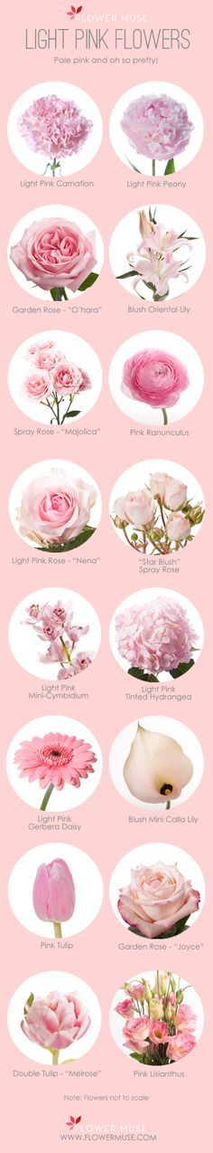 We've put together our list of favorite light pink flowers to inspire you to design something beautiful for your wedding, baby shower or any event!