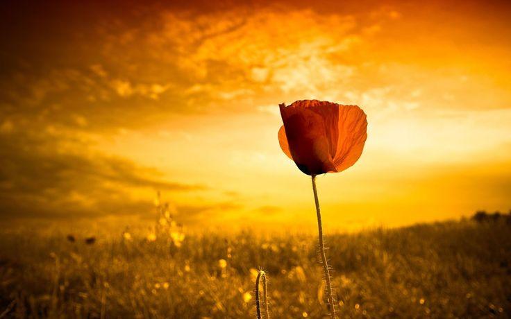 o pro[fé]ta: AGUENTA MAIS UM POUCO Esta mensagem é para ti que tens sido cansado pelas circunstâncias, que tens sido moído e quase destruído pelo peso das lutas. Levanta novamente as tuas mãos cansadas e coloca-te de pé, mesmo que sintas que os teus joelhos não têm mais forças para te suportar na caminhada, porque toda a correção, ao presente, não parece ser de gozo, senão de tristeza, mas depois produz um fruto pacífico de justiça nos exercitados por ela. (Hebreus 12:11)