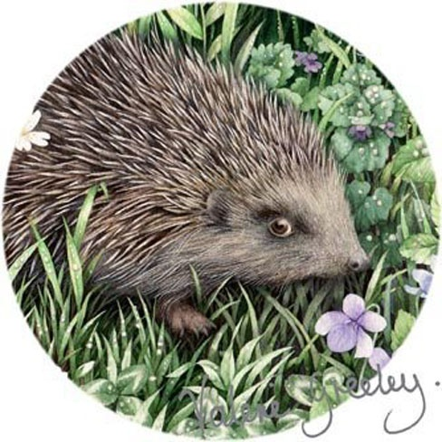 Painting of a hedgie by Greeley