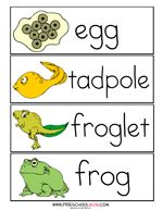 Lifecycle of a Frog Word Wall Cards