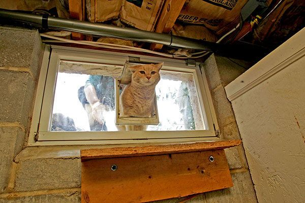 Homemade cat door @ basement sliding window | THE.HOME*Mi ...