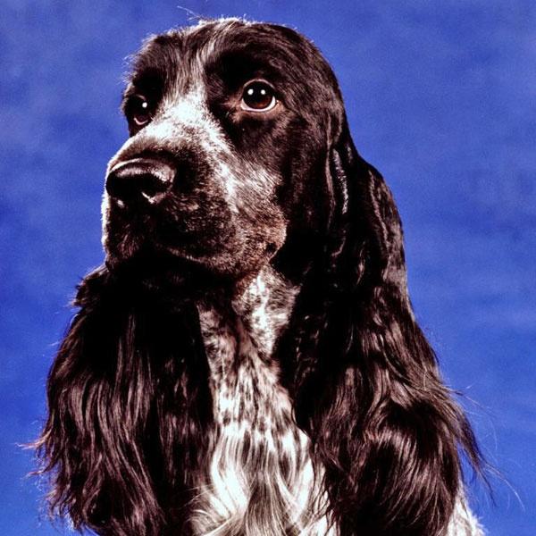 Litney leafconsin dog