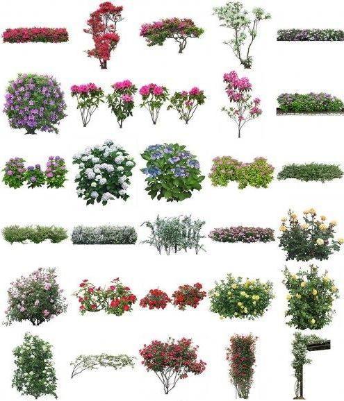 Flowers PSD of Furukawa