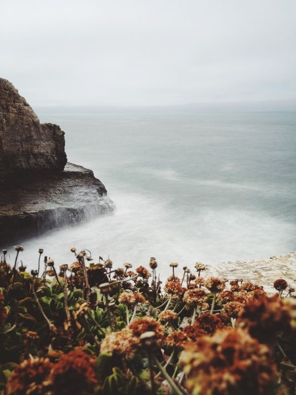 Ocean, cliffs, and flora