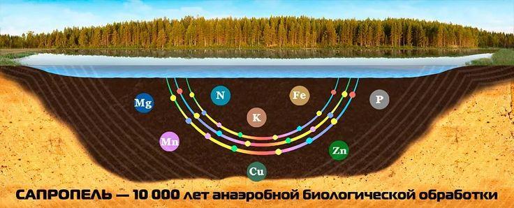 Сапропель – ценное органическое удобрение.