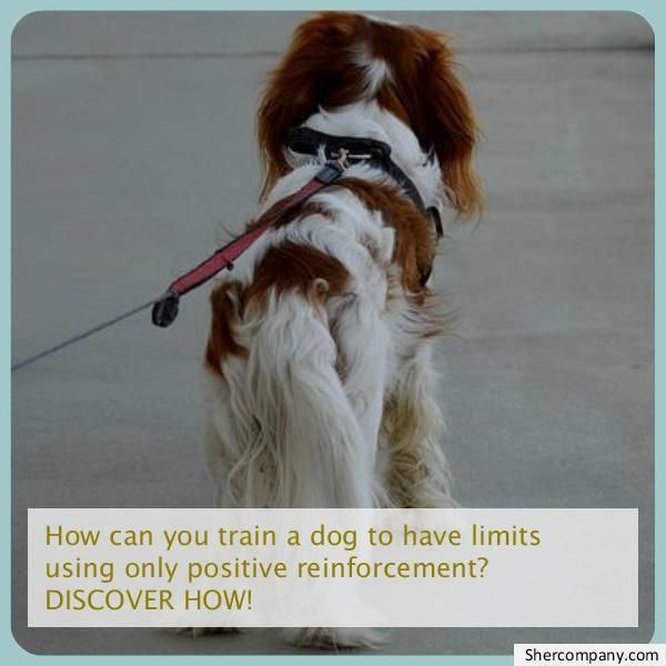 Command For Dog Training Your Pet Dog Should Be As Clean Exactly