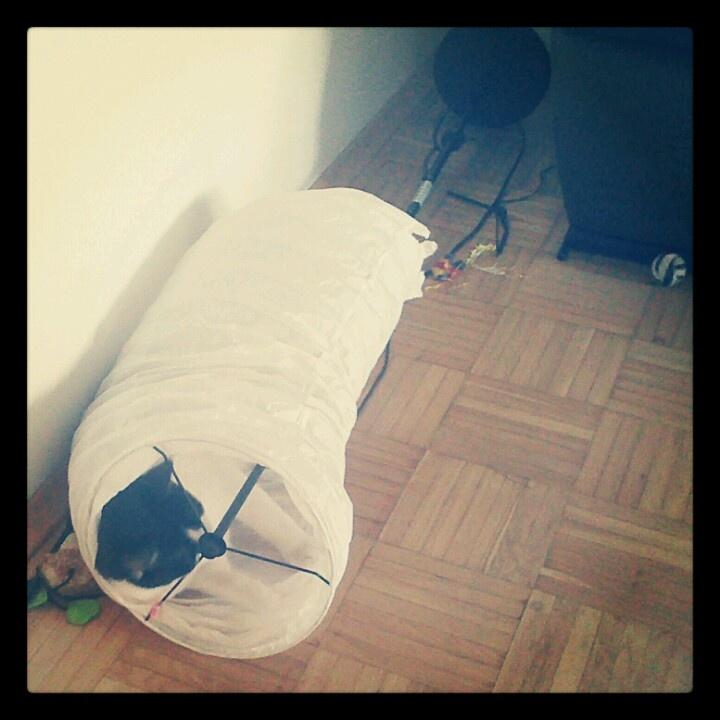 Gary <3 IKEA