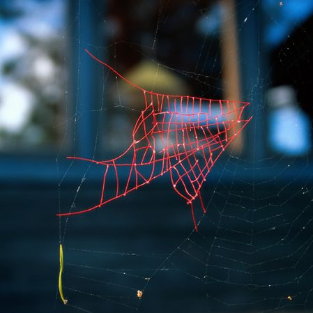 """The Mended Spiderweb series: Nina Katchadourian """"searched for broken spiderwebs which I repaired using red sewing thread."""" Spiders rejected and discarded the repairs."""