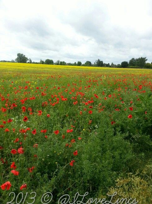 Lovely Lincolnshire yesterday!