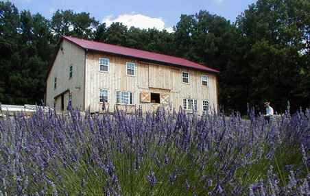 peace valley lavender farm.  love this spot and they allow t.c. to come play with Lilly.