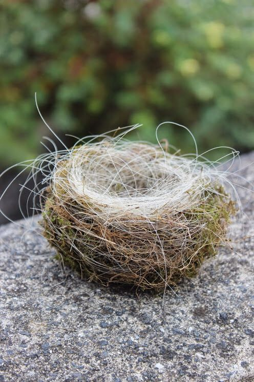 Nest covered with horsehair