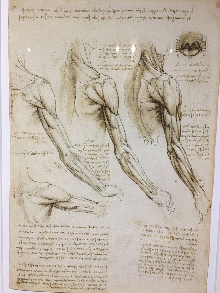 131 besten Leonardo Da Vinci Bilder auf Pinterest | Anatomie ...