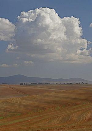 Malmesbury - South Africa
