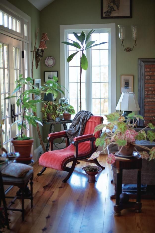 Victorian houseplants: Variegated clown fig and various begonias.