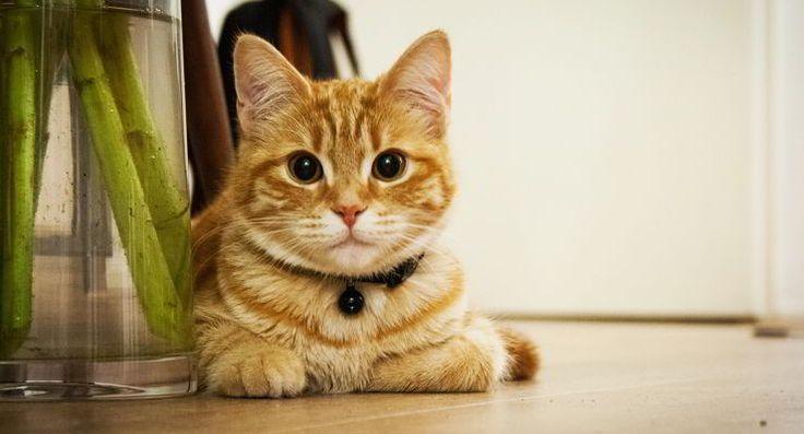 Como eliminar el olor a pis de gato. Os traemos nuevo un Video Tutorial con la solución al problema del olor de orina de gato con remedios caseros naturales que .