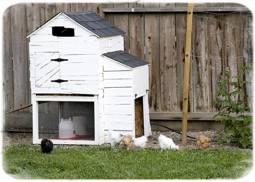 chicken coop - covered with old wood scrapsWood Scrap