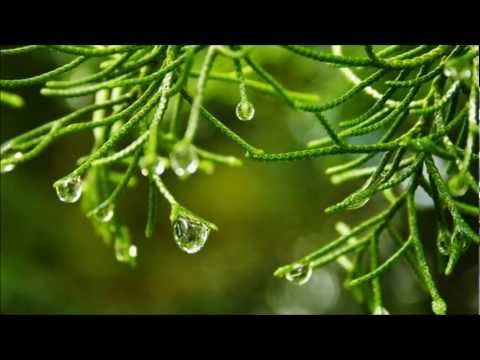 ^Forest Meditation ~ Relax Music via Roosje Knop