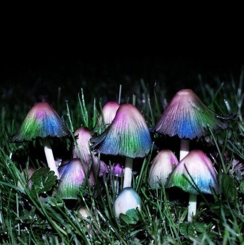 Enchanting mushrooms