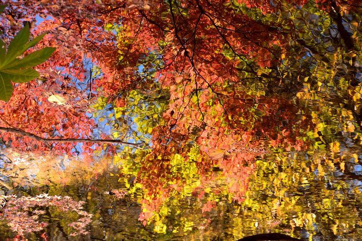 市川市・じゅん菜池緑地の紅葉 Autumn colors/Fall foliage in Ichikawa city,Chiba,Japan