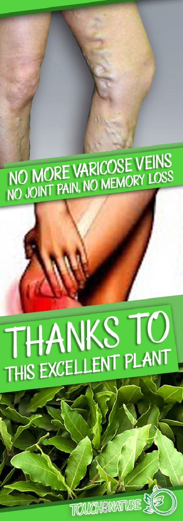 No More Varicose Veins No Joint Pain No Memory Loss Or Headaches Thanks To This Plant Know It #NoMoreVaricoseVeinsNoJointPainNoMemoryLossOrHeadachesThanksToThisPlantKnowIt