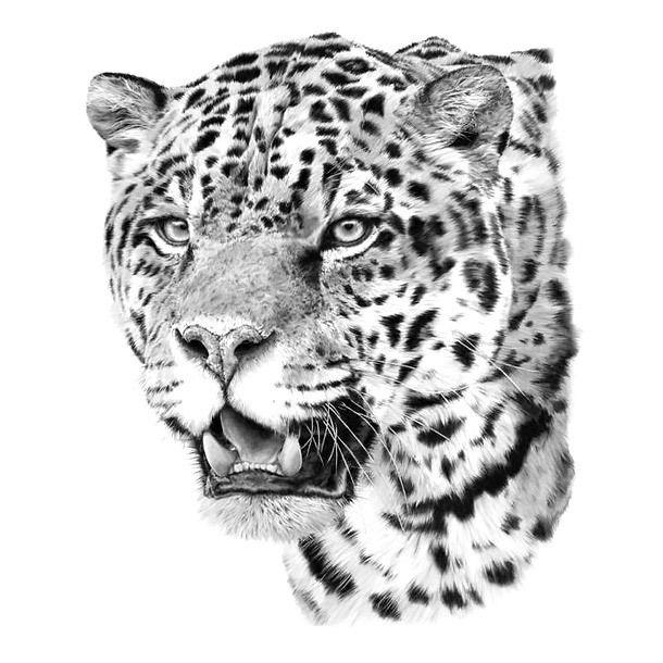 Realistic Jaguar Head Tattoo Design Big Cat Tattoo Leopard Tattoos Head Tattoos