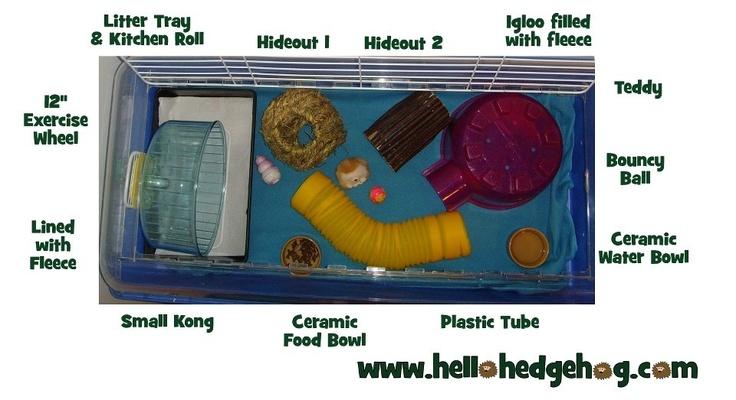 Hedgehog cage set up