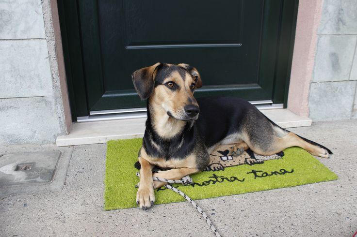 archiLAURA Home Design: Green Front Door
