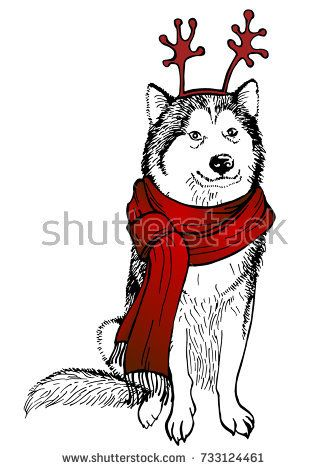 Husky's dog, in a knitted red scarf and antlers mask. Christmas dog. Vector illustration. Template for a card or poster. Print on clothes. Winter holidays. New Year's and Christmas.