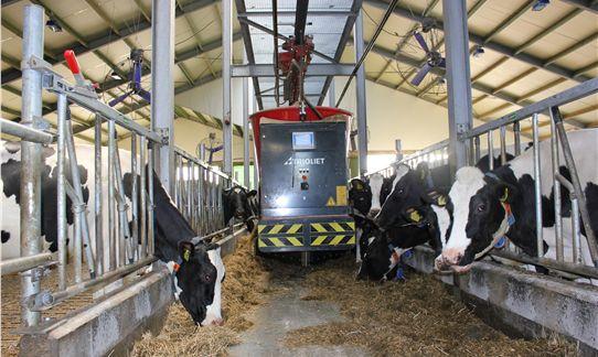[b]Boerderij[/b] - De voeder robot in de koeienstal van FarmCamps Breehees