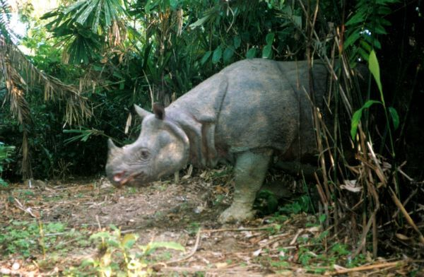 5 of the Most Endangered Species on the Planet