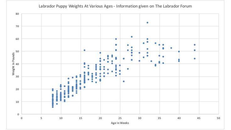 labrador weight chart