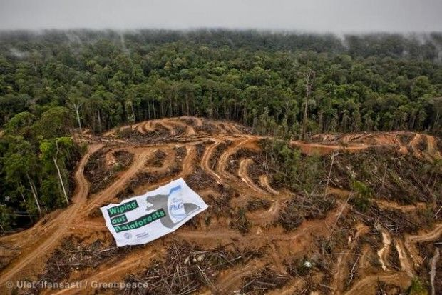 Pressure mounts on Procter & Gamble as Mars agrees to protect Indonesian and Malaysian rainforests | Greenpeace UK