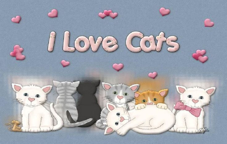 how to cats show love