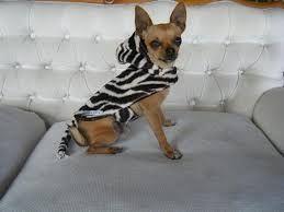 Resultado de imagen para como hacer ropa para perros con ropa usada paso a paso