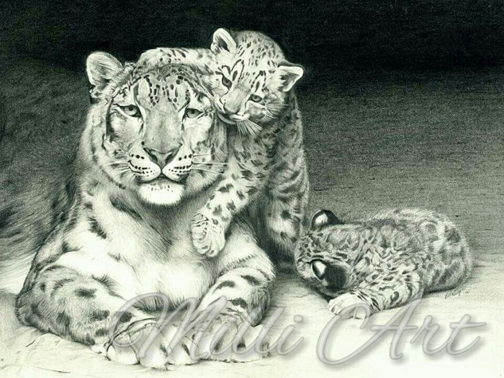 how to draw a snow leopard for beginners