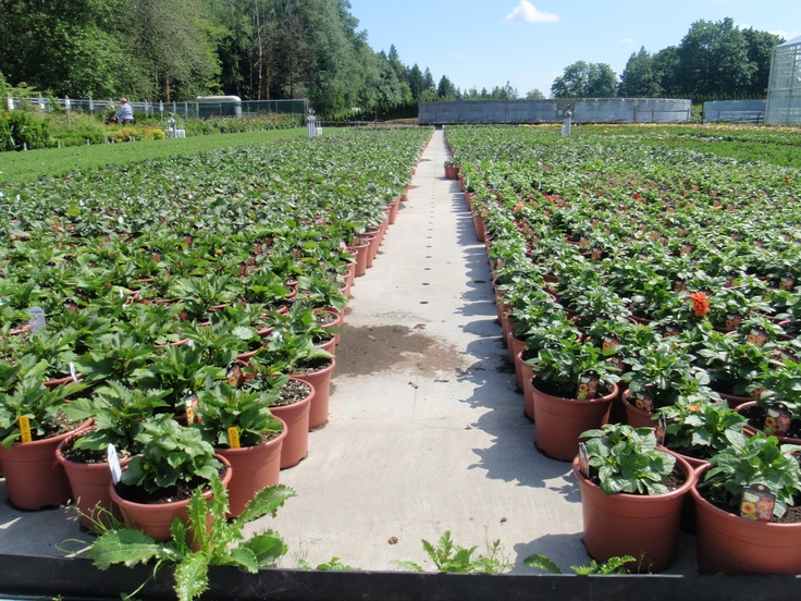 Devon Greenhouse in Abbotsford BC