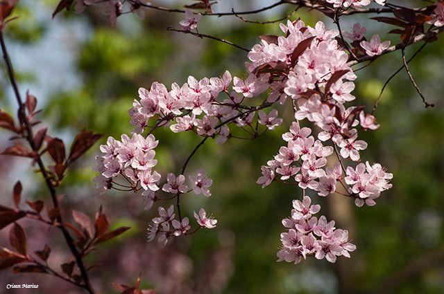 Spring. Crisan Marius - Photographer