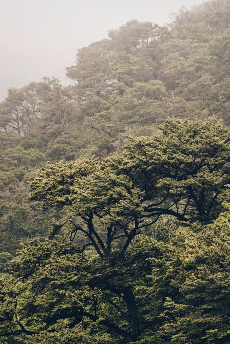 Kristin Thorogood Photography, trees growing from the misty hills in D'Urville Island