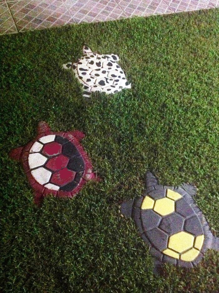 147 Best Trendy Turtle Tanks Etc. ⚙ Images On Pinterest