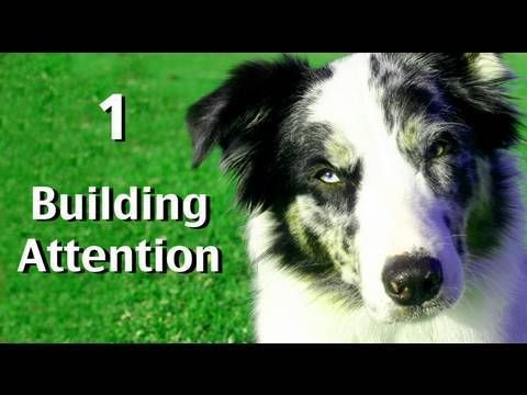 Complete 'how to' free videos on dog training, clicker training and behavior…
